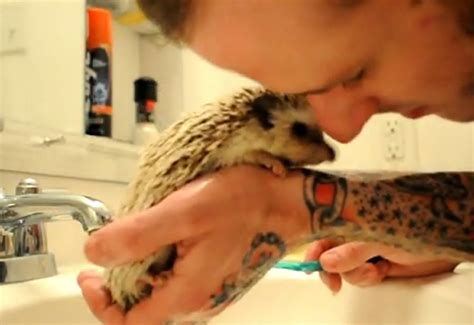 super cute hedgehog bath time