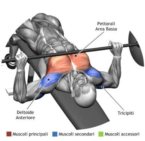 should i do decline bench gain chest muscle using only 3 super effective exercises