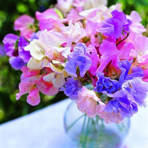 Sweet Blooms by Sweet Pea Bouquet Flowers Flowers Flowers