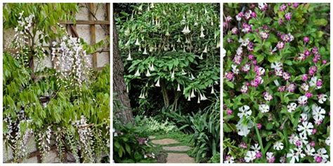 fragrant plants and flowers that bloom at night choosing