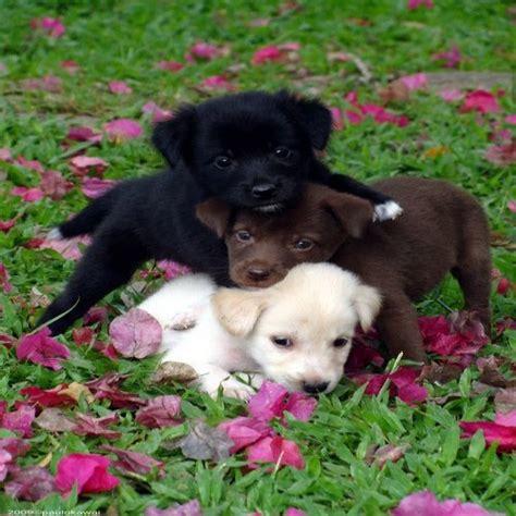 imagenes de animales lindos lindos cachorros imagenes de animales imagenes para