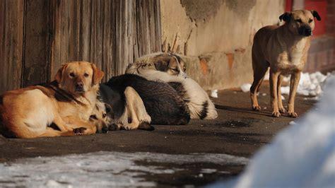 where did dogs come from where did dogs come from new dna test traces origin