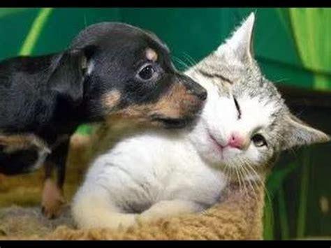 kittens meet puppies    time    laugh