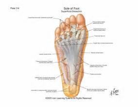 scientia foot lecture notes