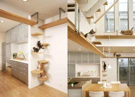 indoor cat room ideas cat activity on gatos cat houses and cat walk