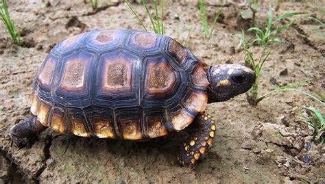 imagenes de libres y tortugas 4 claves para el cuidado de la tortuga terrestre