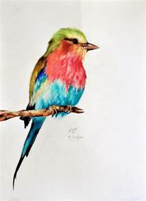 colored birds bird 5 original colored pencil drawing by