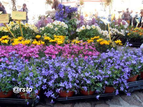 torino fiori via carlo alberto flor 14 la mostra di fiori e vivai profuma via carlo