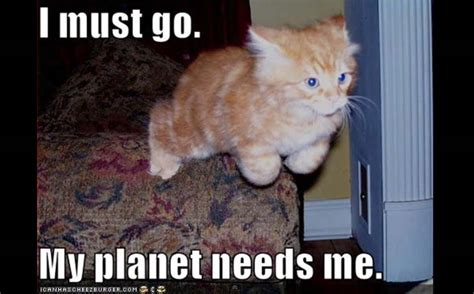 Lolcat Meme - unbelievable kitty on pinterest cats planets and search