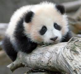 another cute baby animal pictures amazing creatures