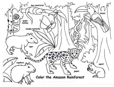 rainforest jaguar coloring pages tropical rainforest animals coloring pages printable