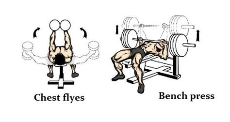 seated chest press vs bench press chest dumbbell flyes vs bench press which exercise is