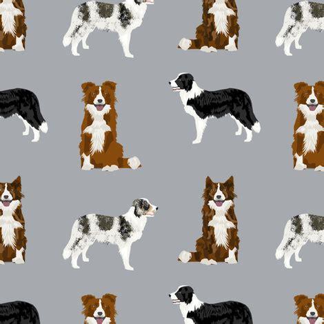 pattern white border collie border collie mixed basic dog breed pattern border collies