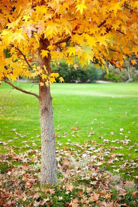 giardino in autunno lavori giardino autunno non sprecare