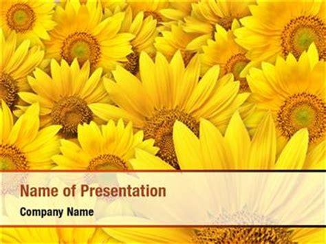 Sunflower Powerpoint Templates Sunflower Powerpoint Backgrounds Templates For Powerpoint Sunflower Powerpoint Template