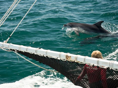 boat cruise geelong sea all dolphin swims tour geelong the bellarine