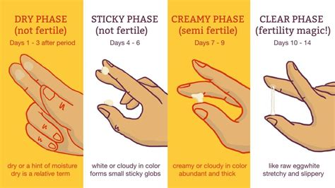 cervical mucus chart   youre fertile pregnancy