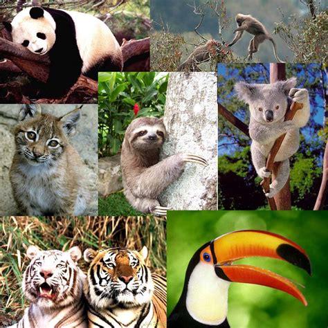 Imagenes De Animales En Extincion | cient 237 ficos clonar 225 n animales en peligro de extinci 243 n