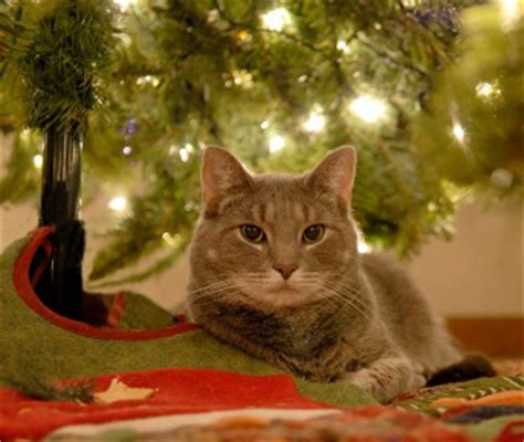 funny wayscto keep cats off christmas tree 8 ways to pet proof your home