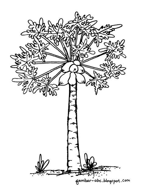 pohon pepaya belajar mewarnai