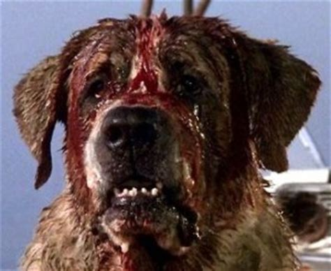 what of is cujo what type of is scooby doo snoopy other dogs