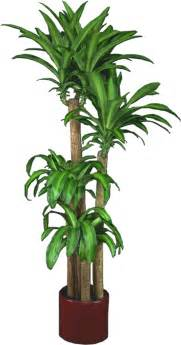 low light indoor plants low light plants indoor plants house plants in boston ma evergreen tropical interiors inc