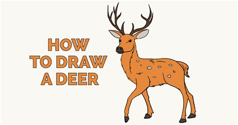 how to a deer how to draw a deer in a few easy steps easy drawing guides
