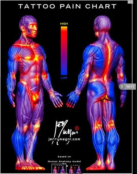 tattoo hurt chart top chart images for tattoos