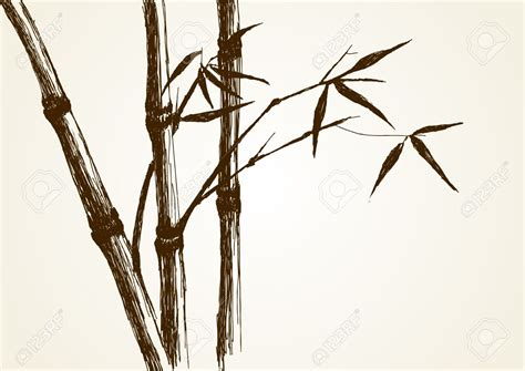 Drawing Of A Bamboo Tree by Bamboo Bamboo Tree Pencil And In Color