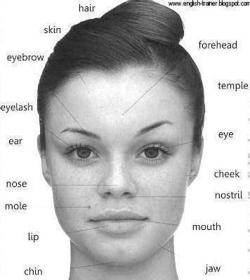 descriptive words for someones face shape elt words describing facial features broadyelt