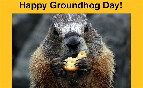 groundhog day hd wallpaper 7 groundhog day wallpapers