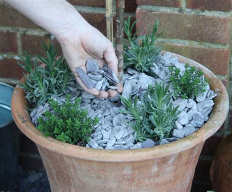 insect repellent patio planter reader offer amateur