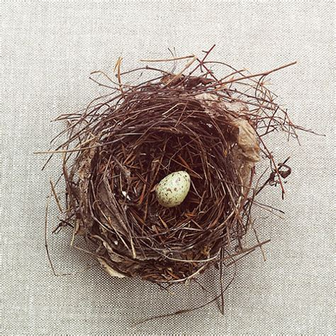 17 pretty pictures of birds nests