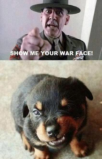 show me pictures of baby puppies show me your war baby pictures animals