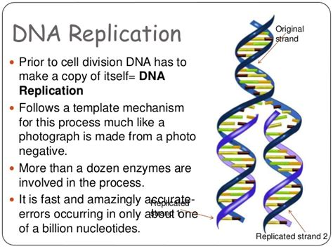 dna replication diagram dna structure and replication
