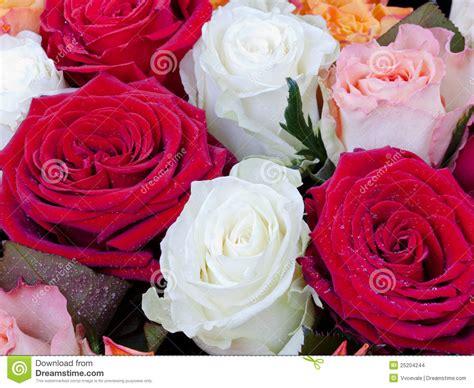 imagenes de flores varias varias rosas multicolores imagenes de archivo imagen