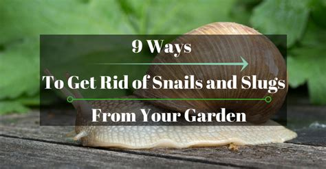 9 ways to get rid of snails and slugs from your garden