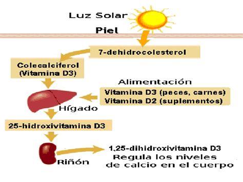 alimentos con vitamina d3 vitamina d