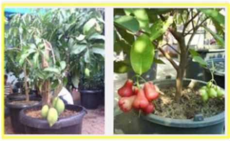 Jual Planter Bag Bogor 5 jenis tanaman buah yang bisa berbuah dalam pot tanaman