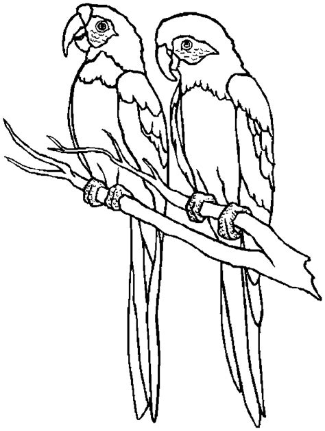 Hd Animals Parrot Bird Coloring Pages Birds Coloring Pages