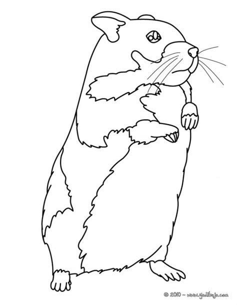 coloring page hamster hamster pages colouring pages