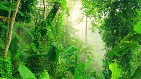 evergreen tropical rainforest scenic landscape background
