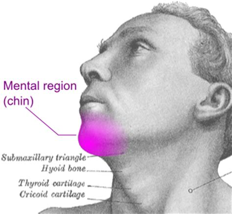 below the chine everything you ever wanted to know about your double chin