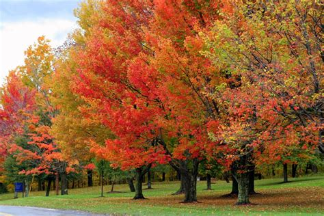 Color Changing Solar Lights For Garden - the fall foliage of vermont s green mountains garden therapy