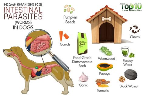 home remedies for intestinal parasites worms in dogs