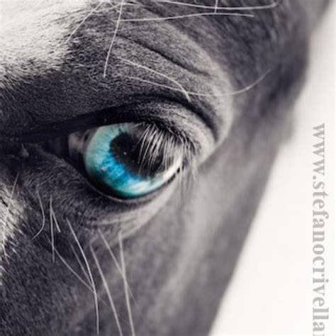 eye tattoo for horses horse eye tattoo merde pinterest