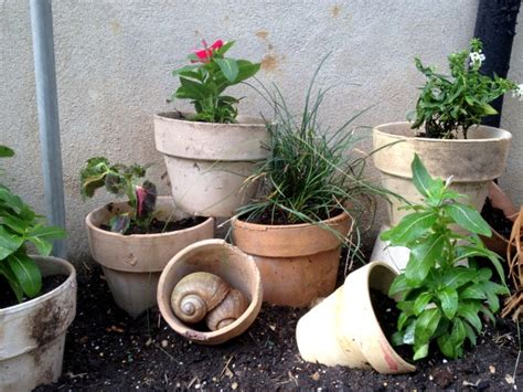 Rock Garden With Potted Plants I Crawled My House To Rescue C R A F T