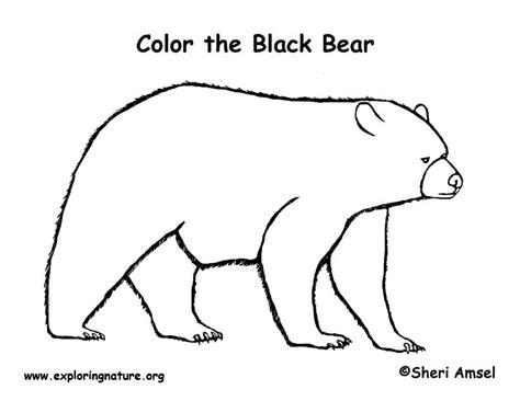 bear black coloring page