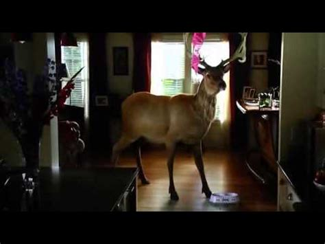 deer in house grown ups dear in house youtube