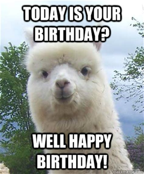 Llama Birthday Meme - today is your birthday well happy birthday alpaca pun alpaca